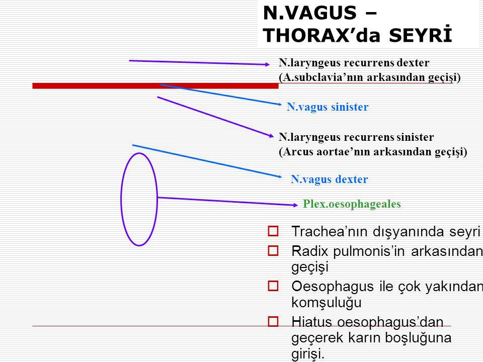 N.VAGUS – THORAX'da SEYRİ