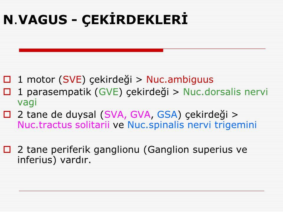 N.VAGUS - ÇEKİRDEKLERİ 1 motor (SVE) çekirdeği > Nuc.ambiguus