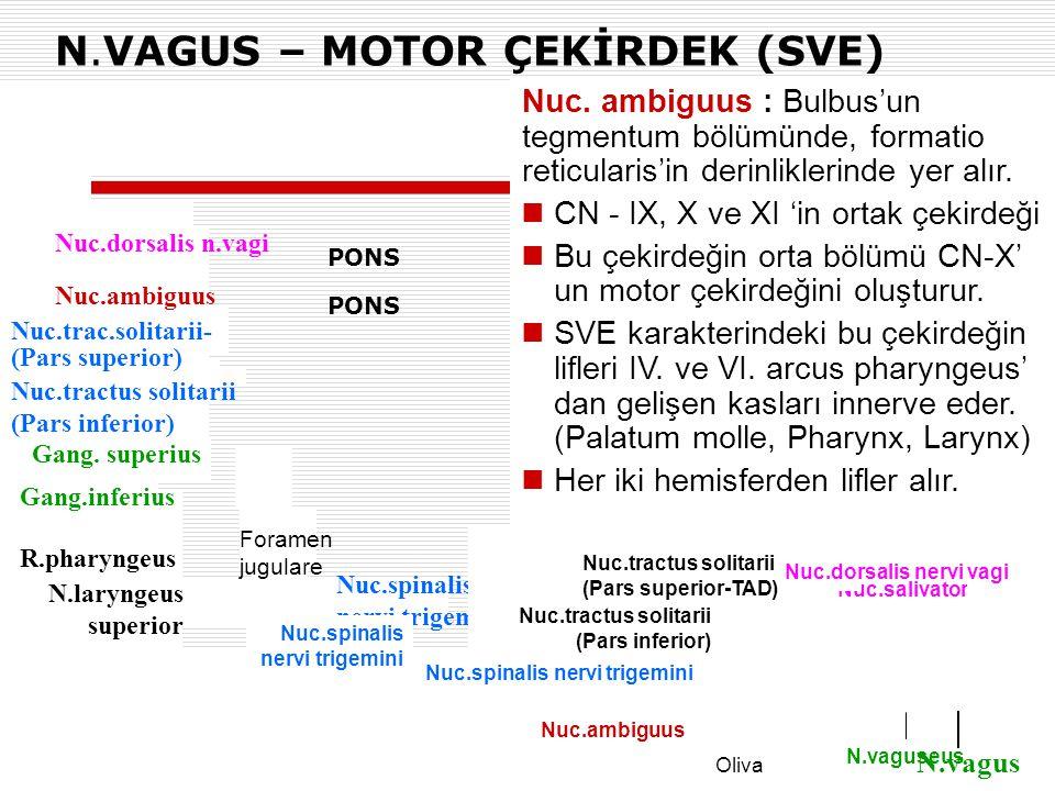 N.VAGUS – MOTOR ÇEKİRDEK (SVE)