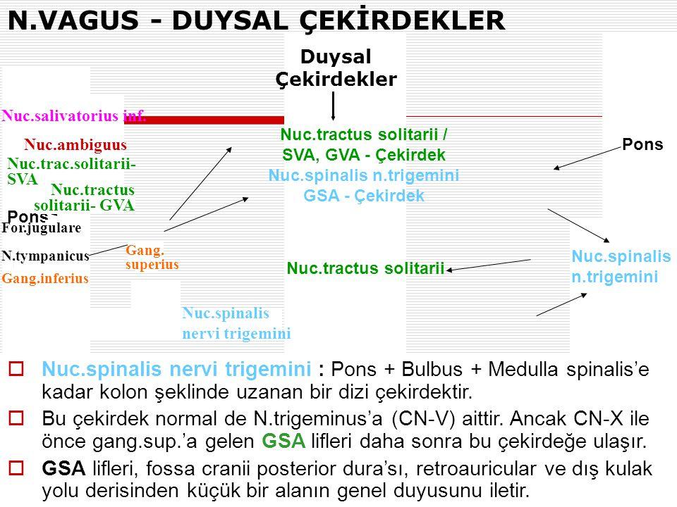N.VAGUS - DUYSAL ÇEKİRDEKLER