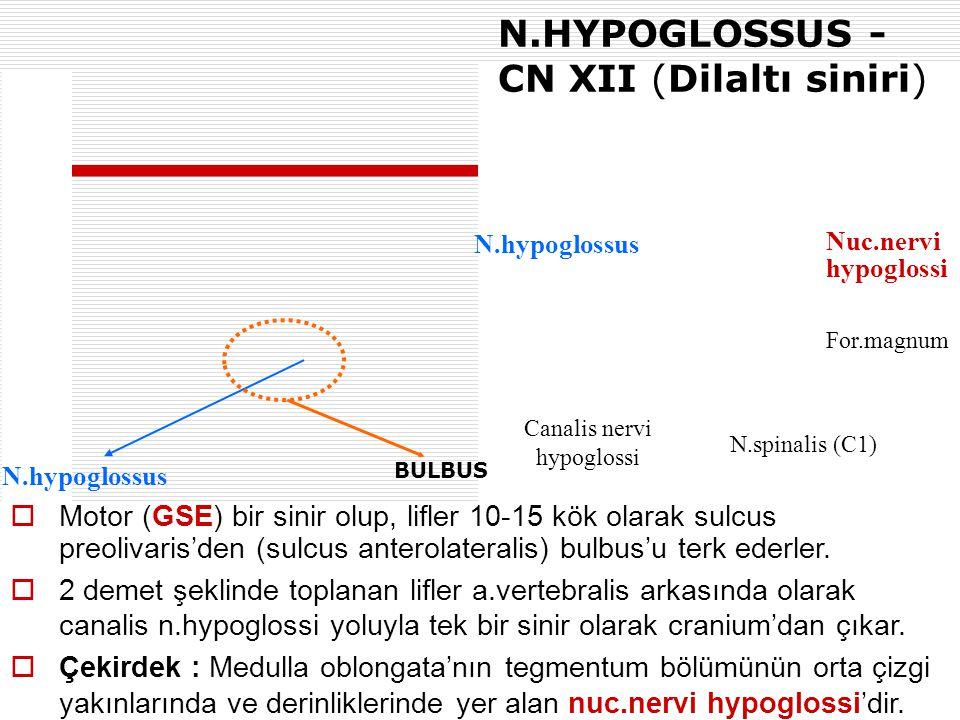 Canalis nervi hypoglossi