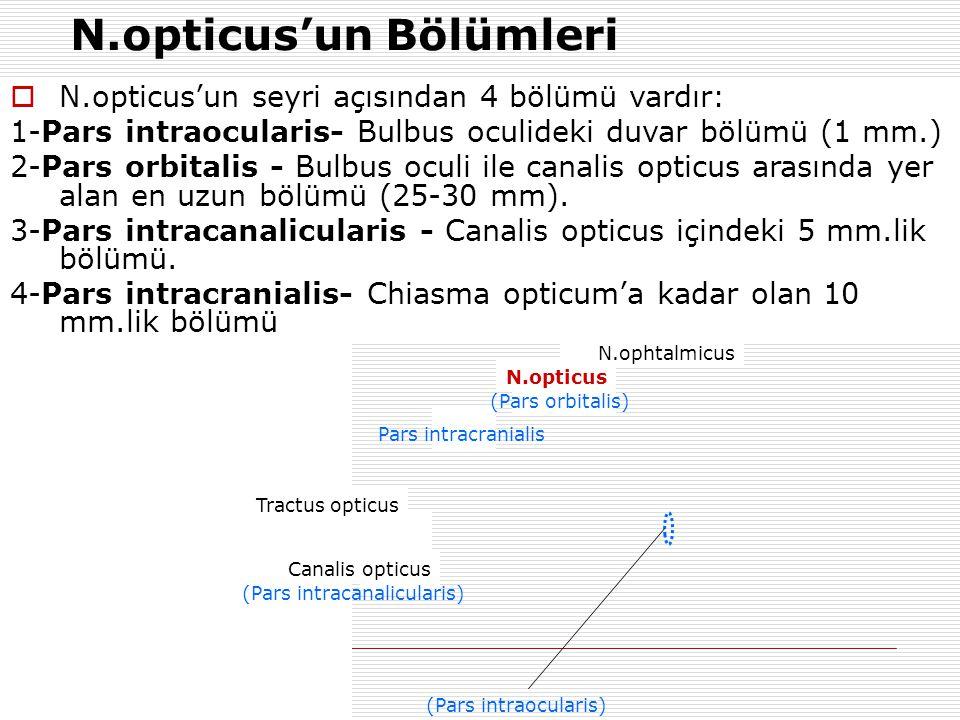 N.opticus'un Bölümleri
