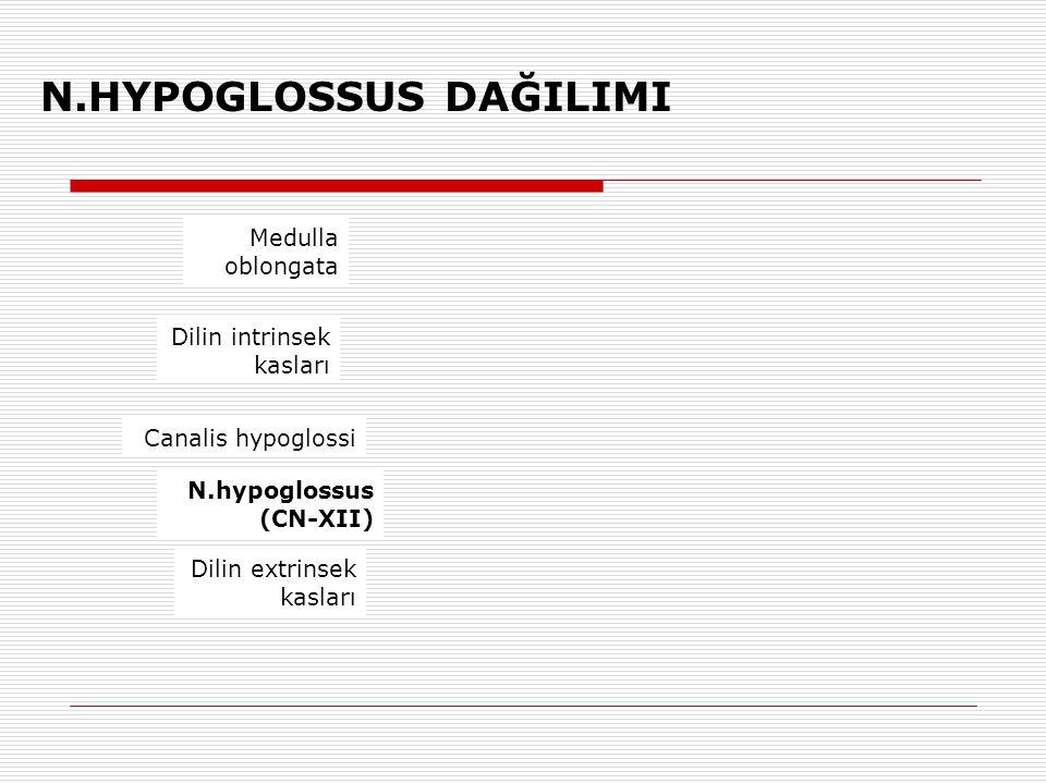 N.HYPOGLOSSUS DAĞILIMI