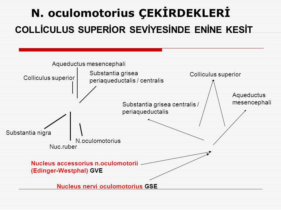 N. oculomotorius ÇEKİRDEKLERİ