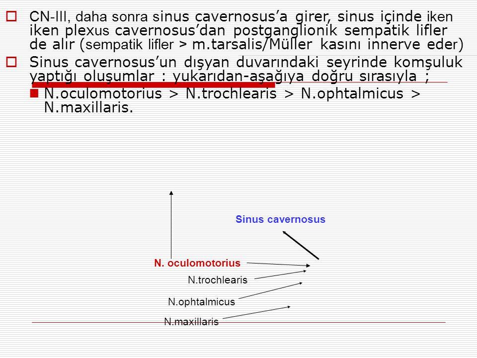 CN-III, daha sonra sinus cavernosus'a girer, sinus içinde iken iken plexus cavernosus'dan postganglionik sempatik lifler de alır (sempatik lifler > m.tarsalis/Müller kasını innerve eder)