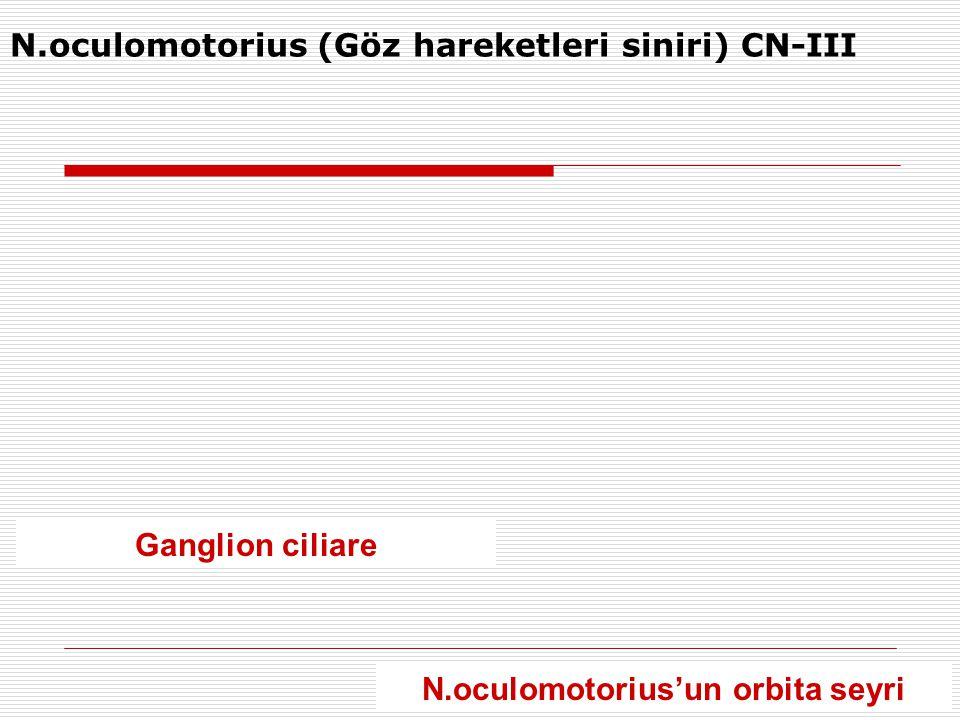 N.oculomotorius (Göz hareketleri siniri) CN-III