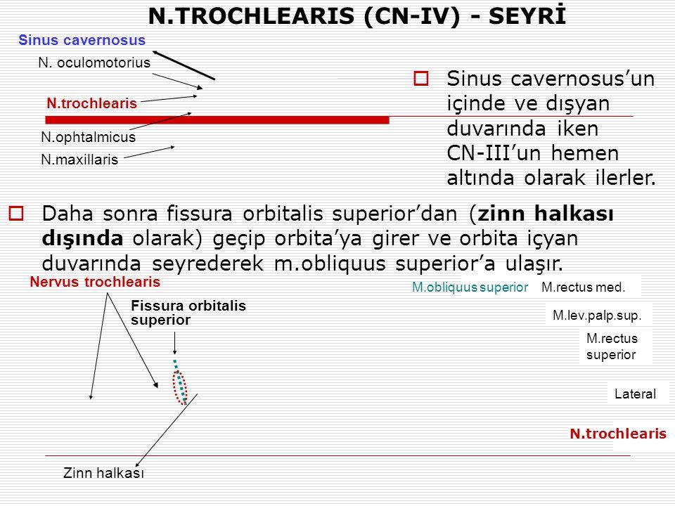 N.TROCHLEARIS (CN-IV) - SEYRİ