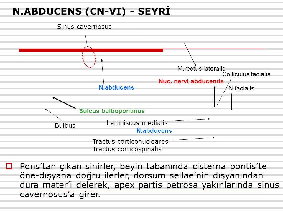 N.ABDUCENS (CN-VI) - SEYRİ