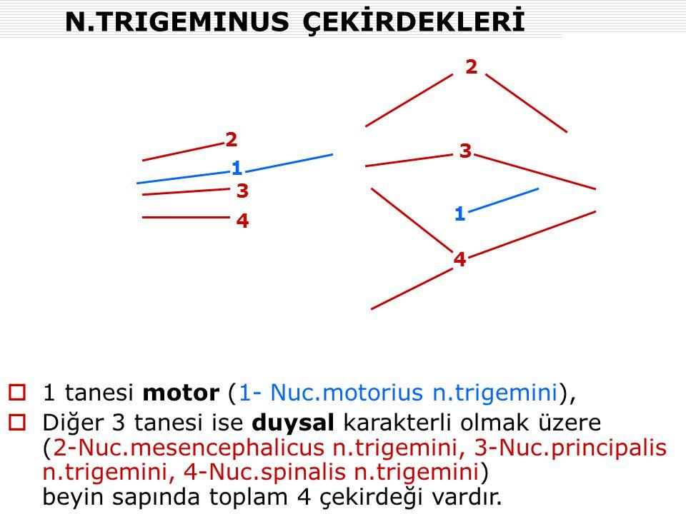 N.TRIGEMINUS ÇEKİRDEKLERİ