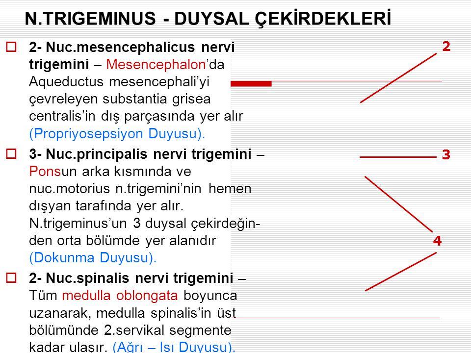 N.TRIGEMINUS - DUYSAL ÇEKİRDEKLERİ