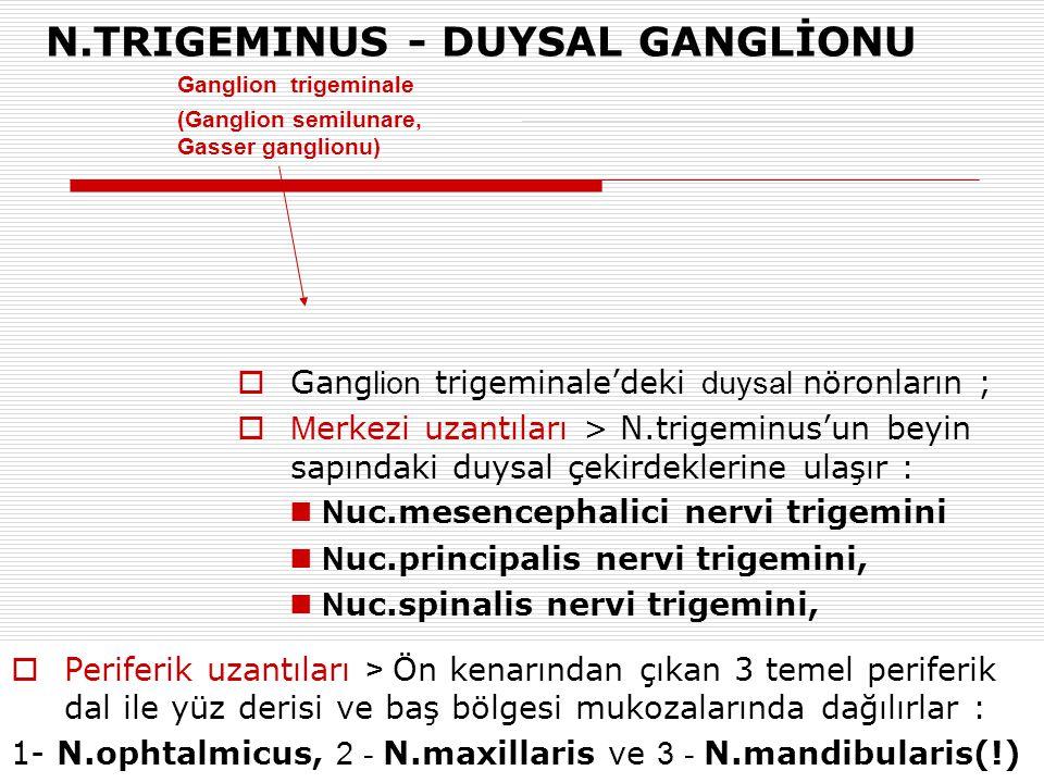 N.TRIGEMINUS - DUYSAL GANGLİONU