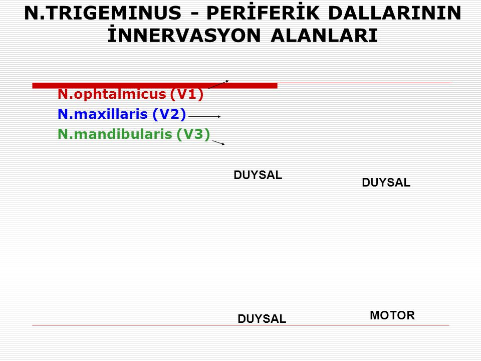 N.TRIGEMINUS - PERİFERİK DALLARININ İNNERVASYON ALANLARI