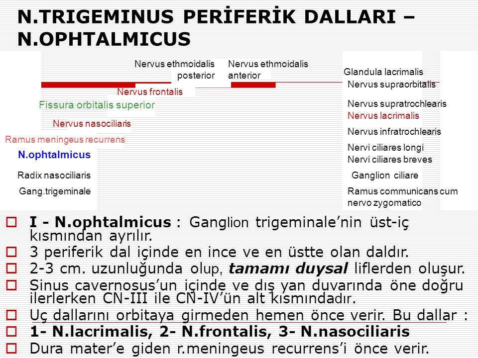 N.TRIGEMINUS PERİFERİK DALLARI – N.OPHTALMICUS