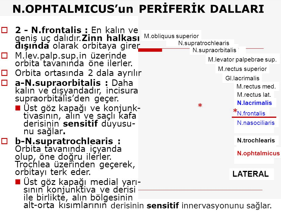N.OPHTALMICUS'un PERİFERİK DALLARI