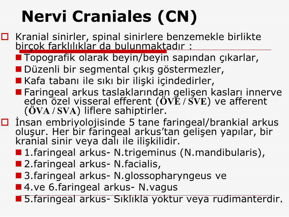 Nervi Craniales (CN) Kranial sinirler, spinal sinirlere benzemekle birlikte birçok farklılıklar da bulunmaktadır :