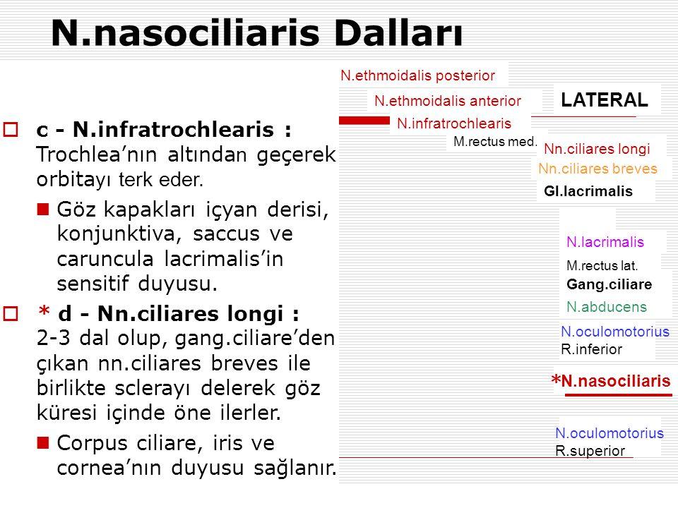 N.nasociliaris Dalları