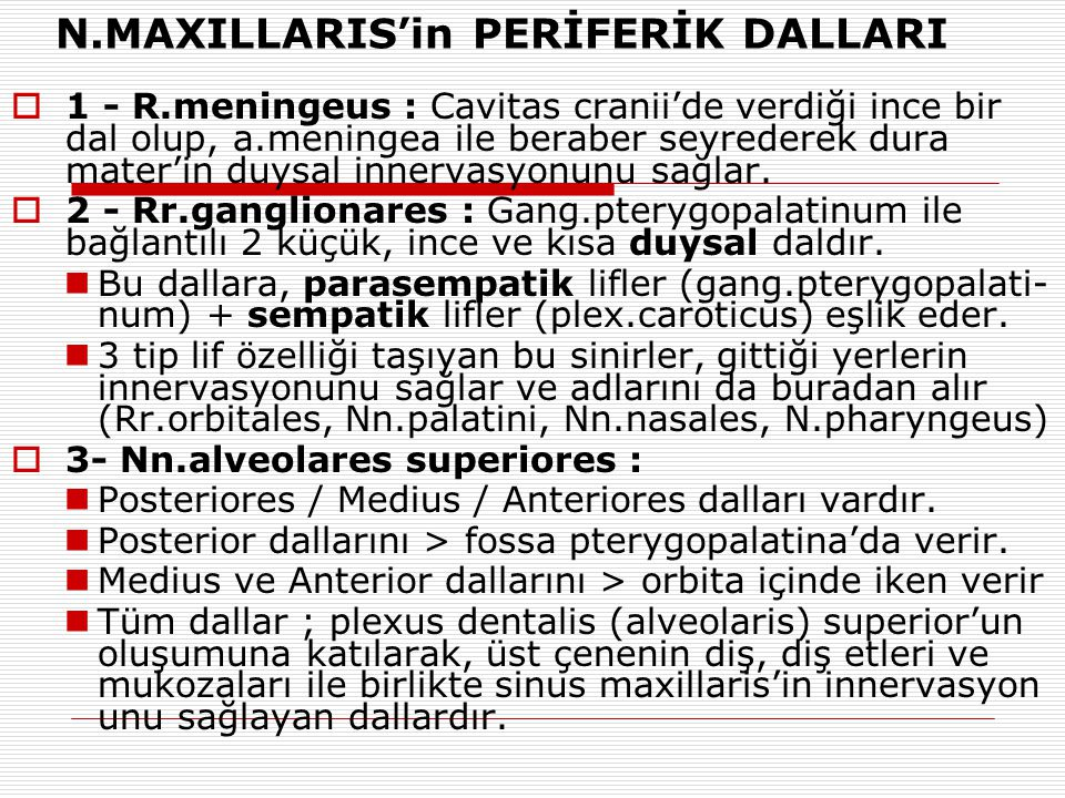 N.MAXILLARIS'in PERİFERİK DALLARI
