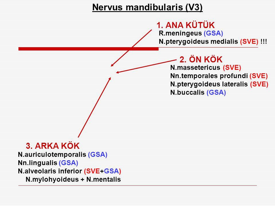 Nervus mandibularis (V3)