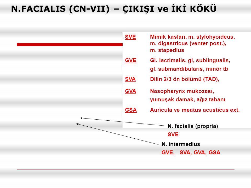 N.FACIALIS (CN-VII) – ÇIKIŞI ve İKİ KÖKÜ