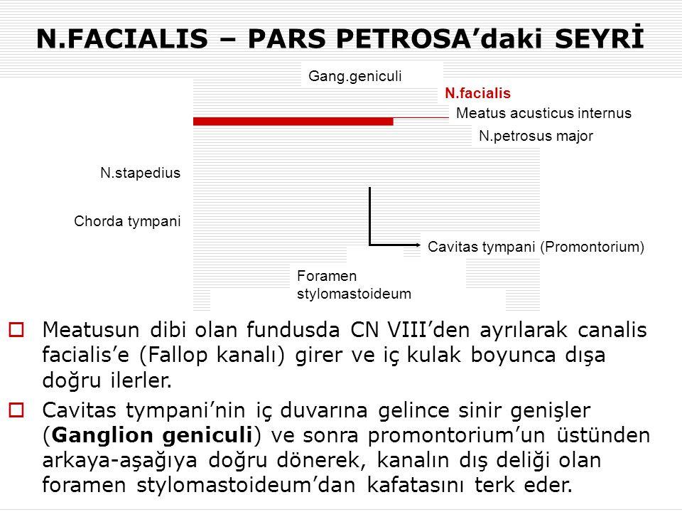 N.FACIALIS – PARS PETROSA'daki SEYRİ