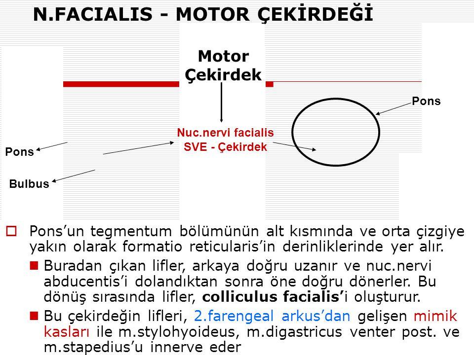 Nuc.nervi facialis SVE - Çekirdek