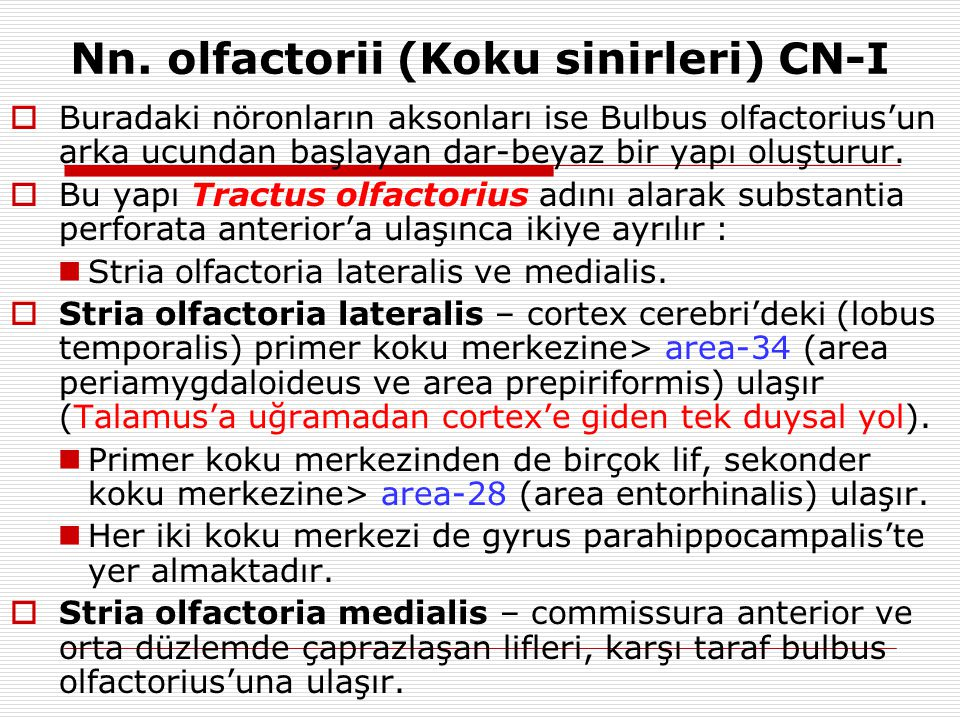 Nn. olfactorii (Koku sinirleri) CN-I