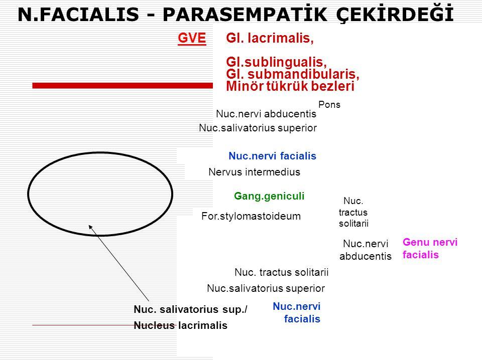 N.FACIALIS - PARASEMPATİK ÇEKİRDEĞİ