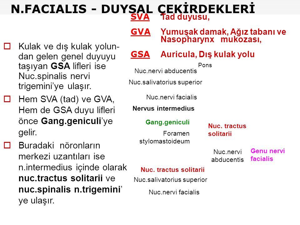 N.FACIALIS - DUYSAL ÇEKİRDEKLERİ