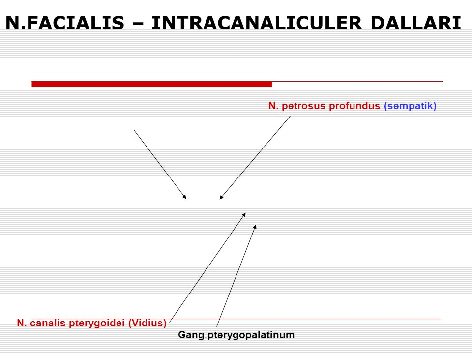 N.FACIALIS – INTRACANALICULER DALLARI