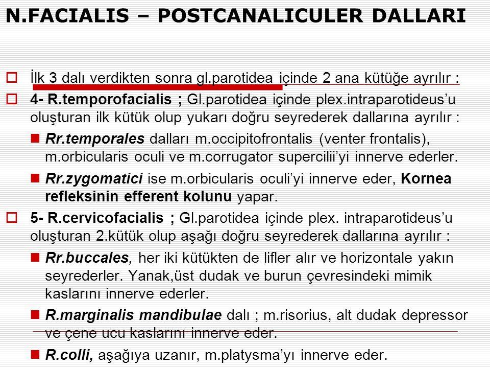 N.FACIALIS – POSTCANALICULER DALLARI