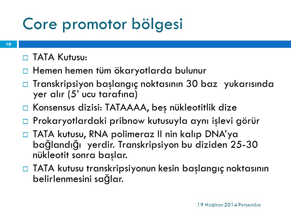 Core promotor bölgesi TATA Kutusu: