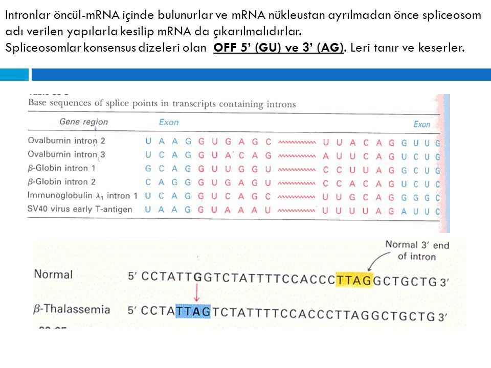 Intronlar öncül-mRNA içinde bulunurlar ve mRNA nükleustan ayrılmadan önce spliceosom adı verilen yapılarla kesilip mRNA da çıkarılmalıdırlar.