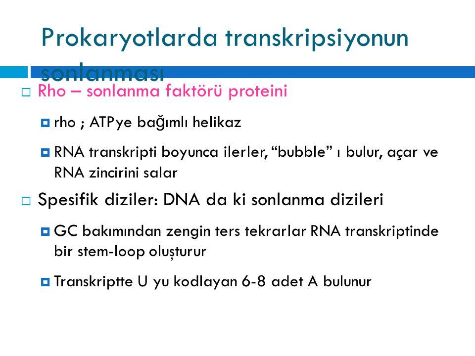 Prokaryotlarda transkripsiyonun sonlanması