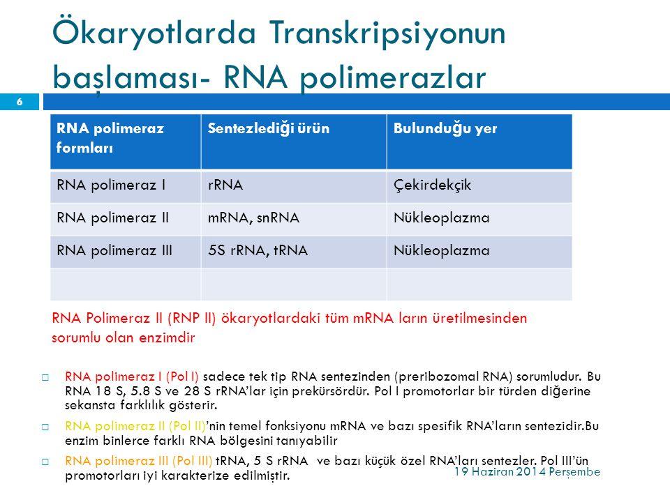 Ökaryotlarda Transkripsiyonun başlaması- RNA polimerazlar