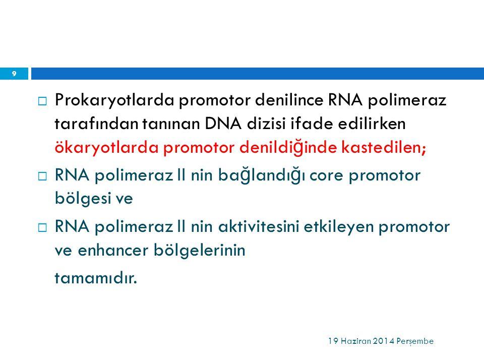 RNA polimeraz II nin bağlandığı core promotor bölgesi ve
