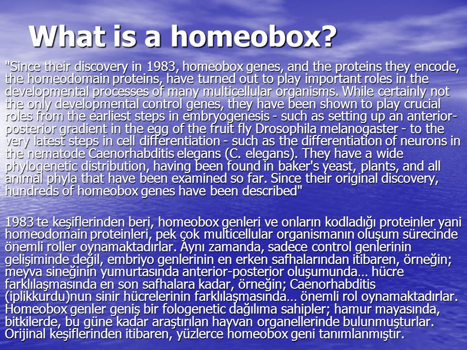 What is a homeobox