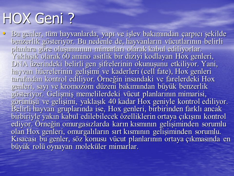 HOX Geni