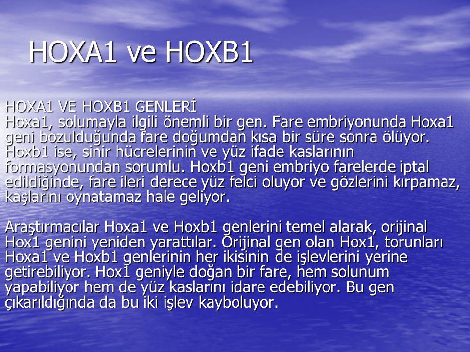 HOXA1 ve HOXB1