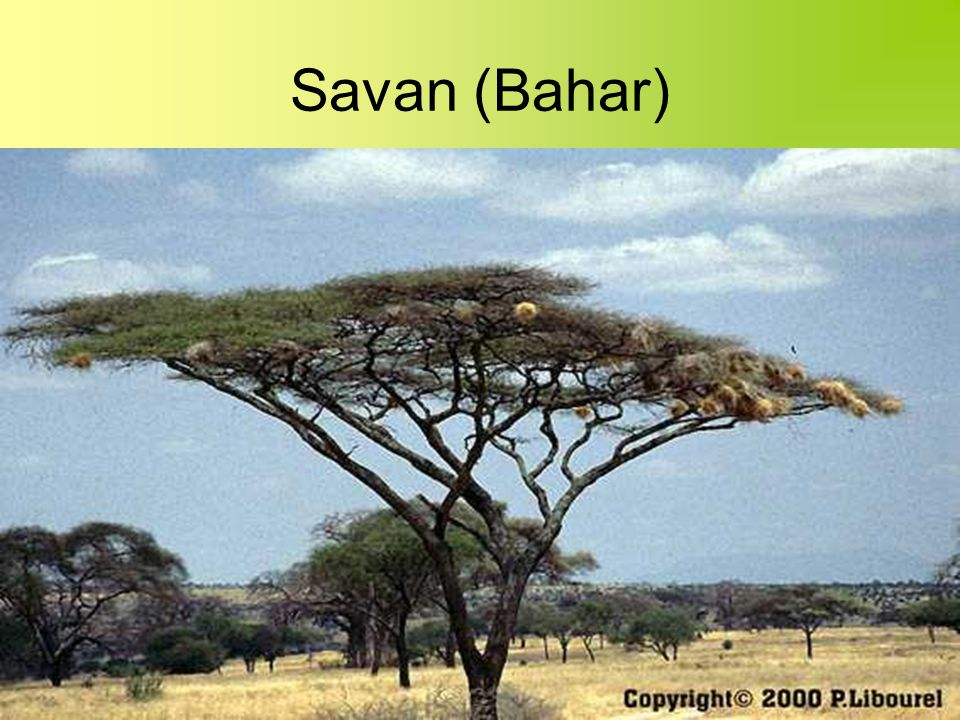 Savan (Bahar)