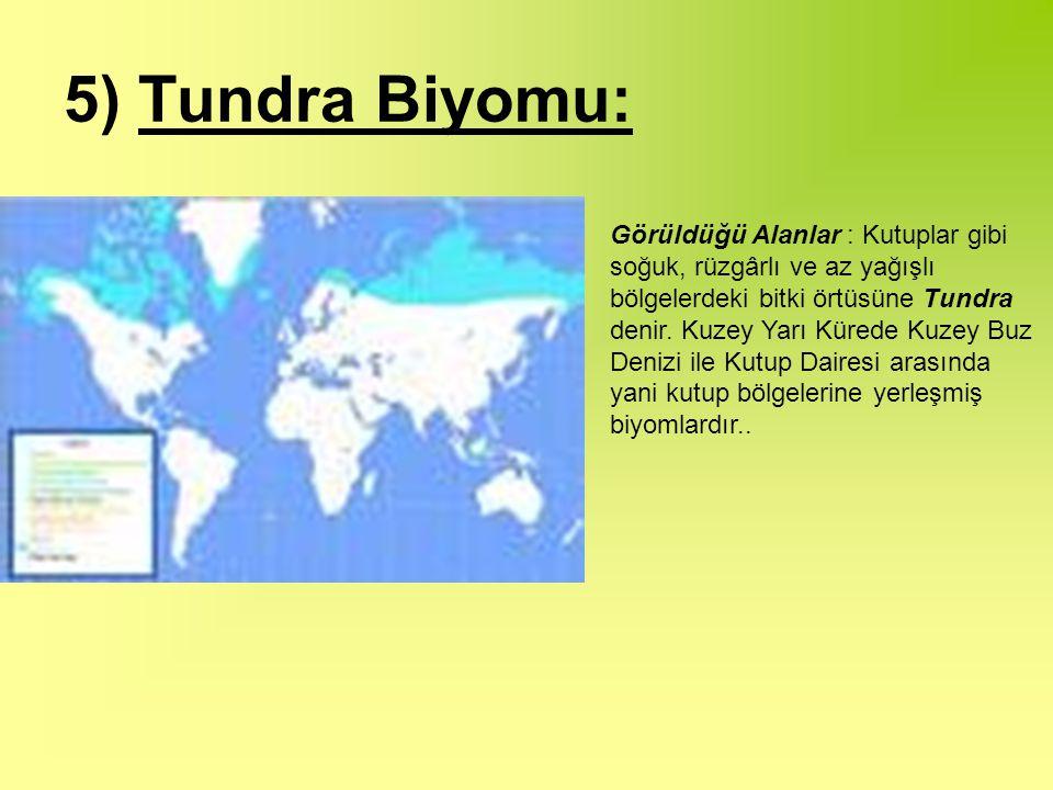 5) Tundra Biyomu: