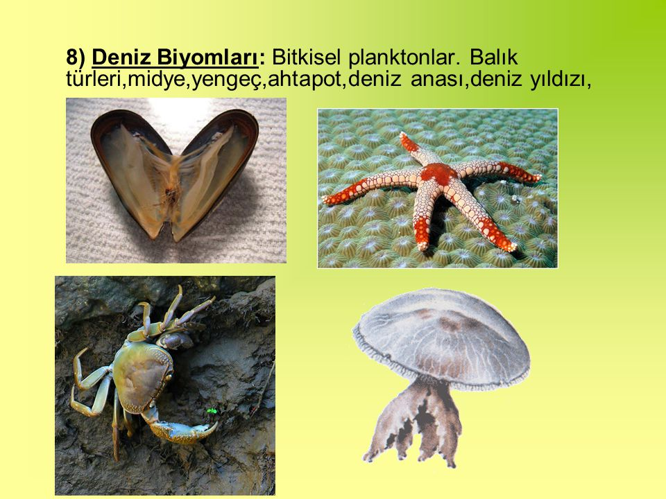 8) Deniz Biyomları: Bitkisel planktonlar