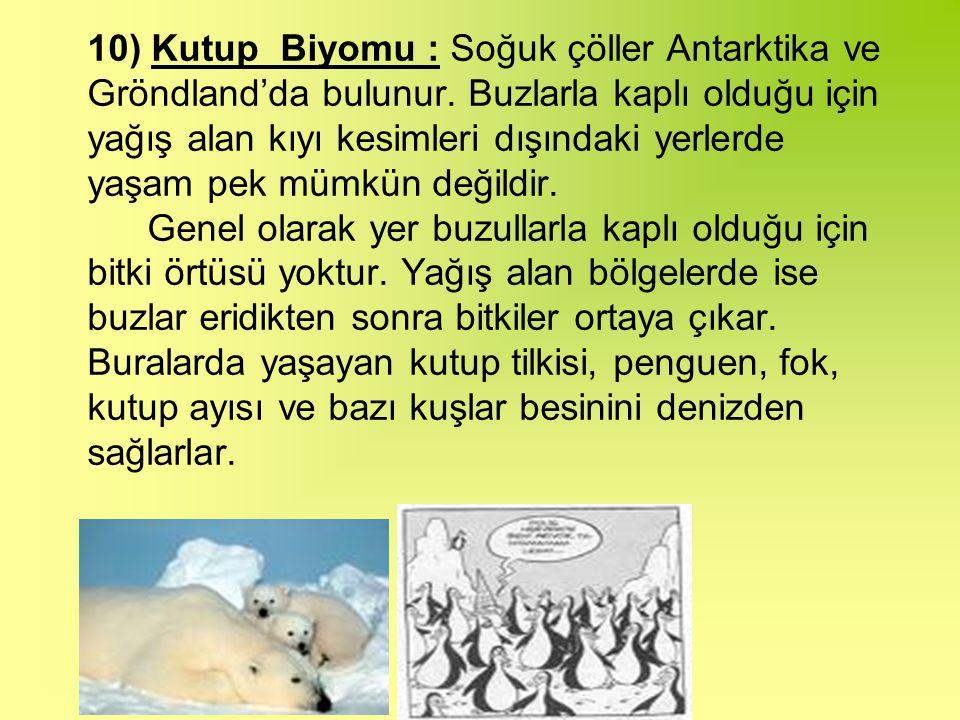 10) Kutup Biyomu : Soğuk çöller Antarktika ve Gröndland'da bulunur