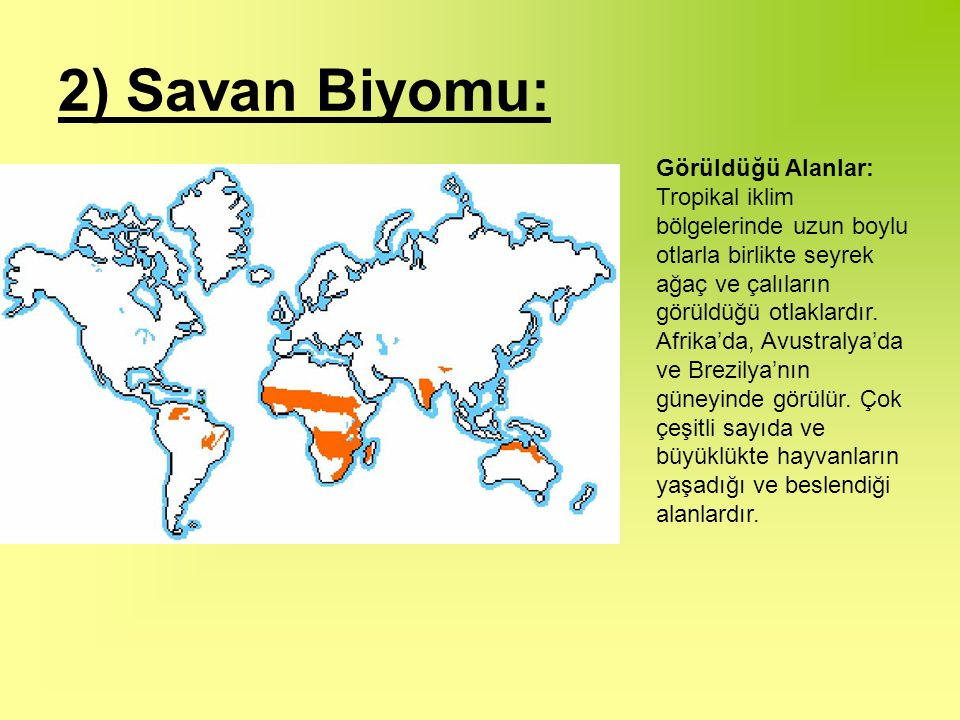 2) Savan Biyomu: