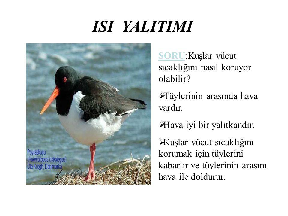 ISI YALITIMI SORU:Kuşlar vücut sıcaklığını nasıl koruyor olabilir