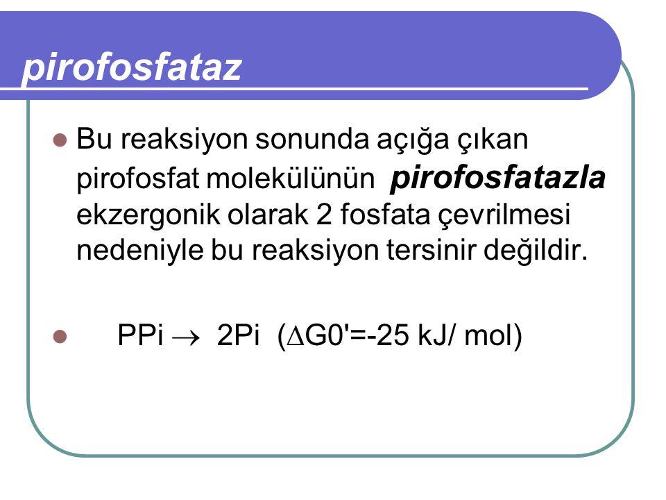 pirofosfataz