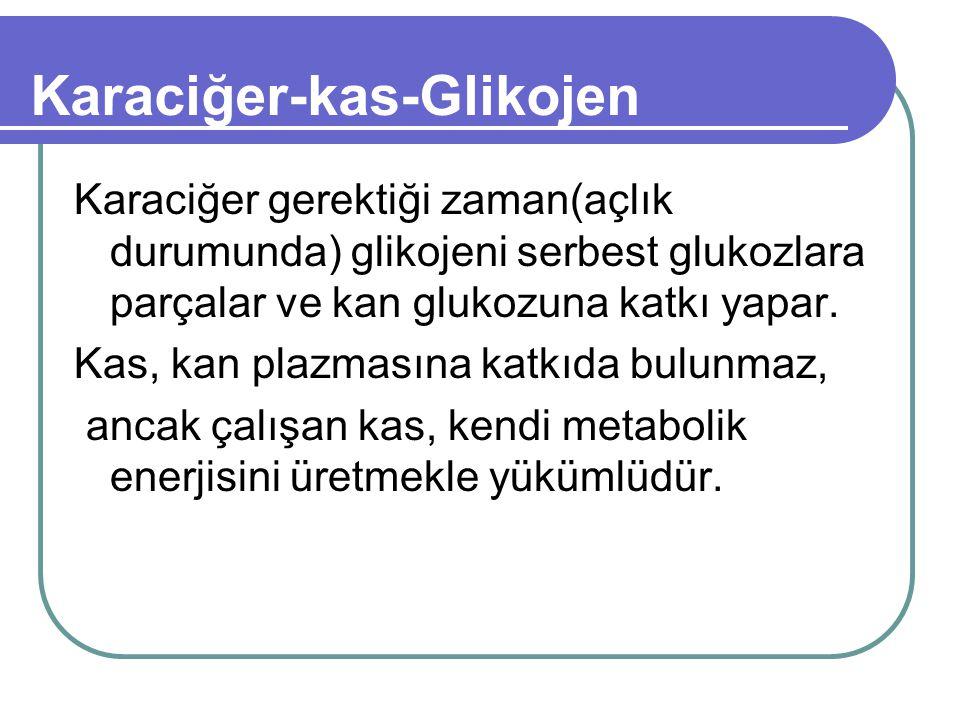 Karaciğer-kas-Glikojen