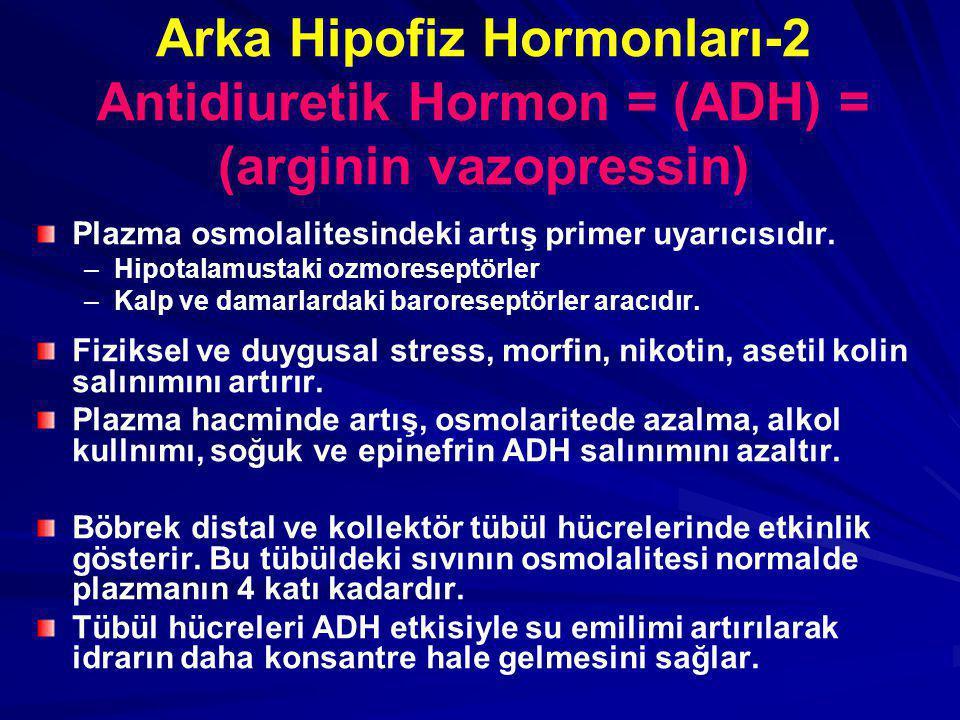 Arka Hipofiz Hormonları-2 Antidiuretik Hormon = (ADH) = (arginin vazopressin)