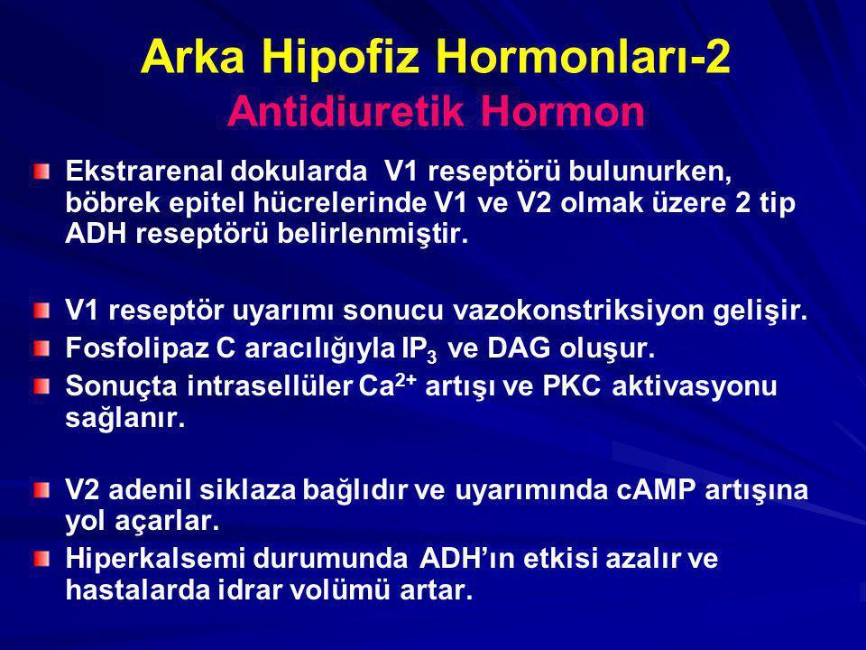 Arka Hipofiz Hormonları-2 Antidiuretik Hormon