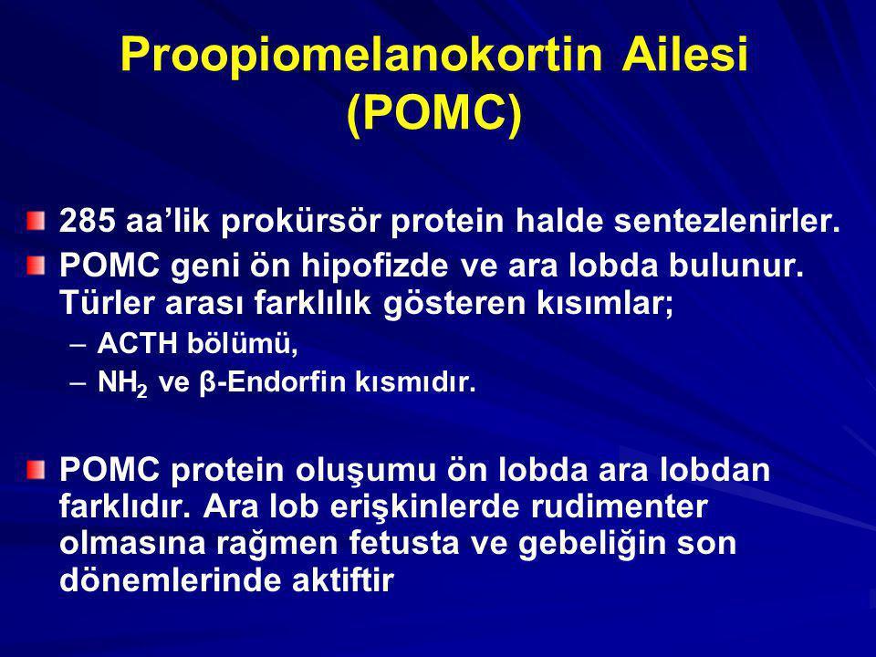 Proopiomelanokortin Ailesi (POMC)