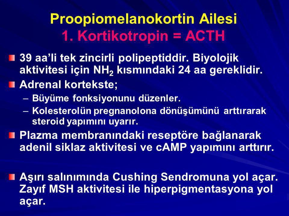 Proopiomelanokortin Ailesi 1. Kortikotropin = ACTH